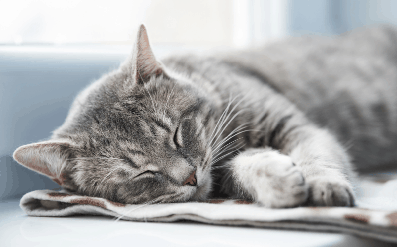 Rescued Cat Has a Successful Emotion Code Session